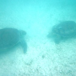 seaturtles-9