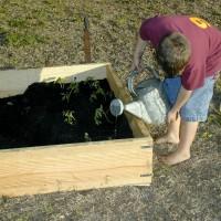 Termite-raised-bed-garden