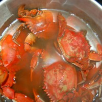 boiled-crabs