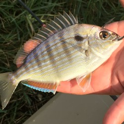 Fish-ID