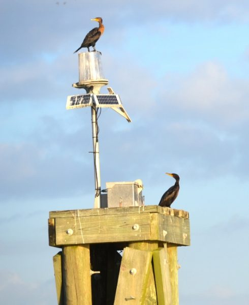 lake-decade-cormorants-3-blog